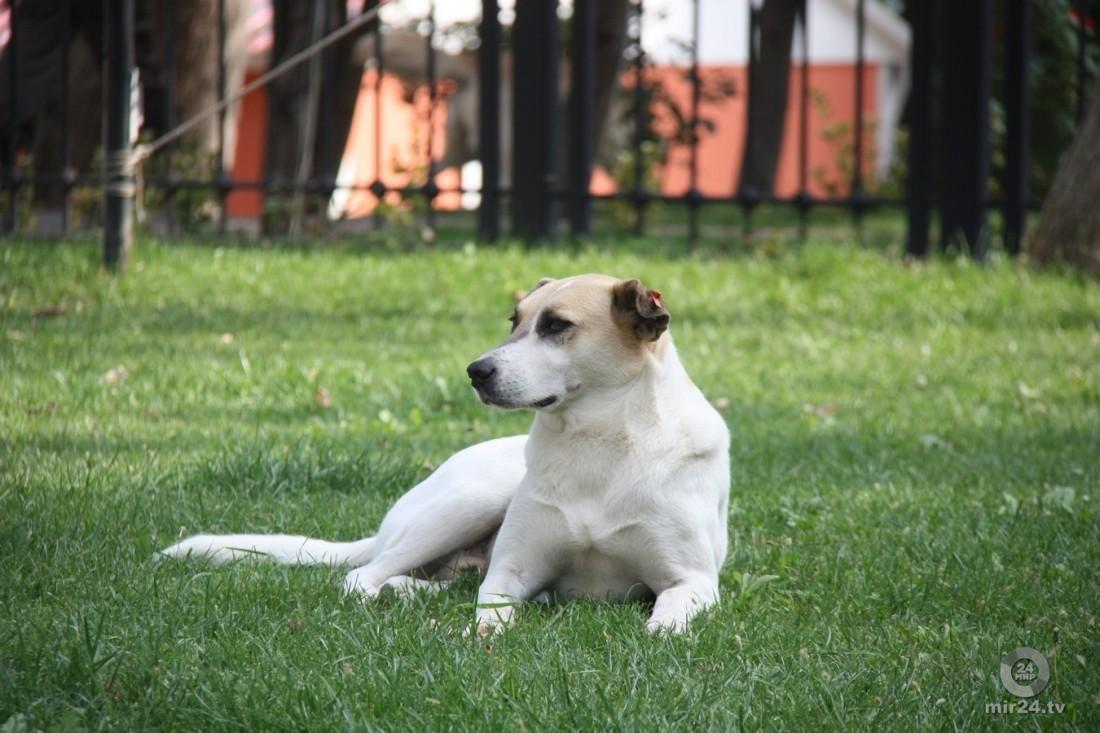 Собака, собака лежит, собака в Турции с отметкой, собака