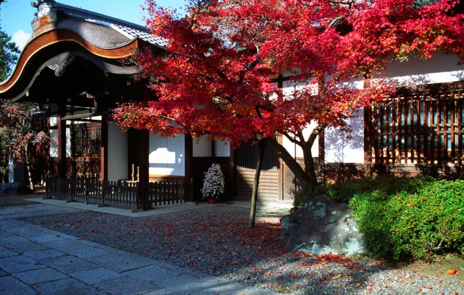 Сезон момидзи, или Как в Японии охотятся на красные клены