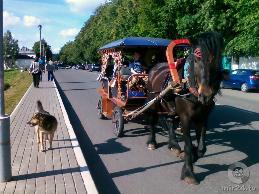В Тульской области по скоростному шоссе носится верблюд