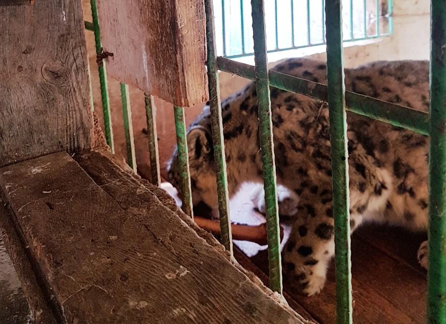 Новая жизнь: диких зверей учат жить рядом с людьми
