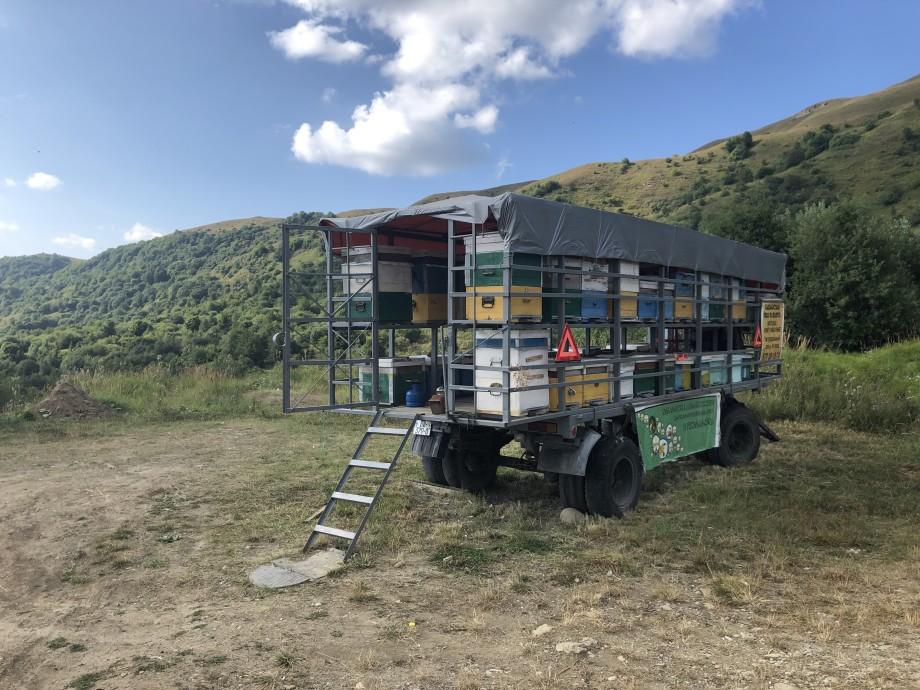 Сладкий янтарь: в Грузии завершается заготовка меда на зиму