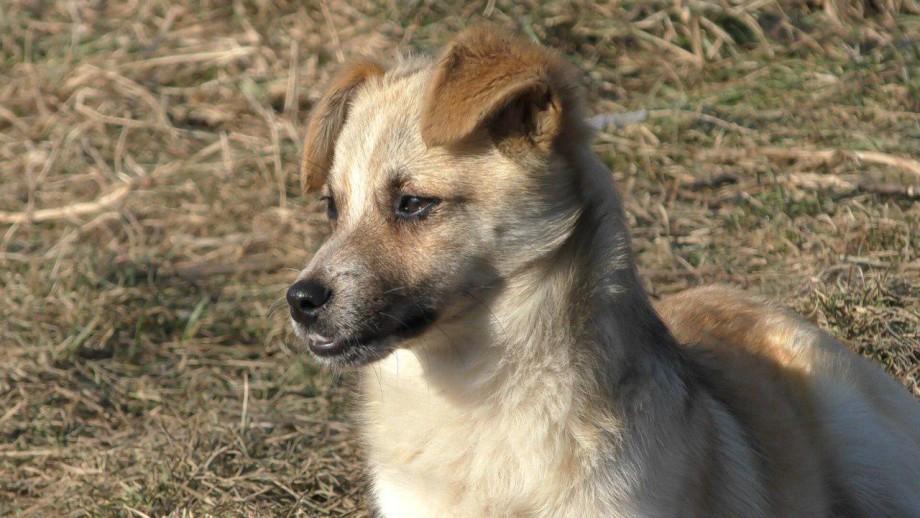 Журналисты «МИРа» подарили бездомным собакам в Нальчике корм и новые вольеры