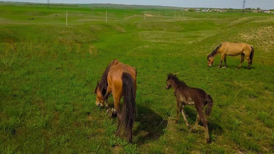 Деликатесы из конины: жал, жая, карта