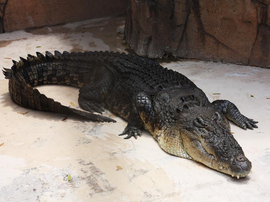 Мир для животных: все самое интересное о Московском зоопарке