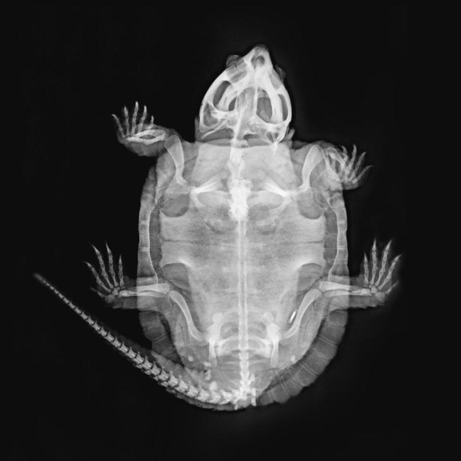 Лондонский зоопарк выложил в Сеть рентгеновские снимки своих животных