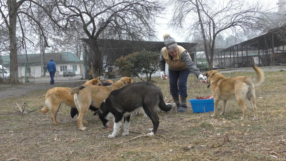 Феи для бездомных псов: как четыре подруги открыли приют для животных