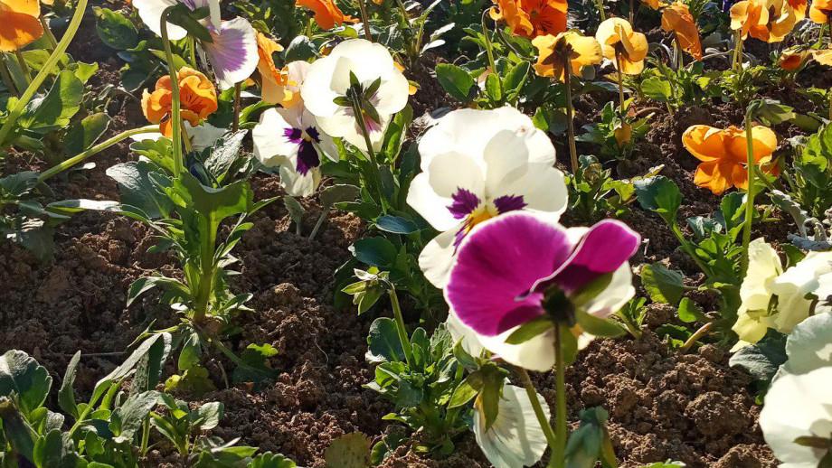 Парк Победы в Душанбе украсят 80 тысяч цветов