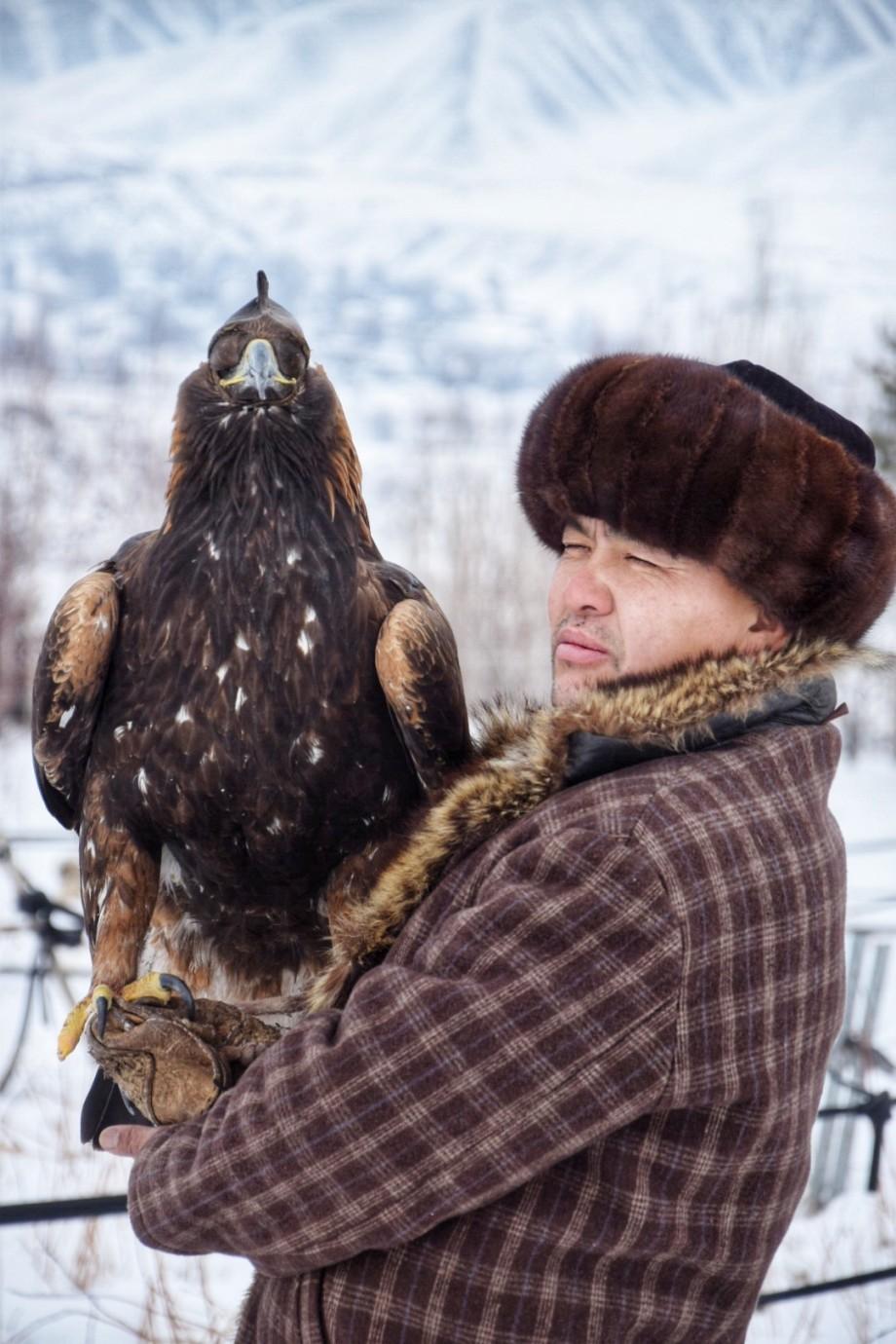 Беркут-завоеватель: птица, дважды поборовшая волка