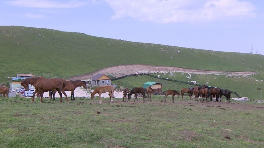 Детокс по-киргизски: чем лечились Толстой и Чехов