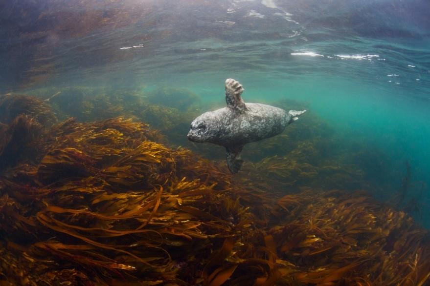 Гора крабов и робкие тюлени: как снимают дикую природу