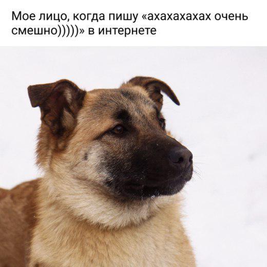 Пользователям «ВКонтакте» предложили приютить собак вместо просмотра мемов