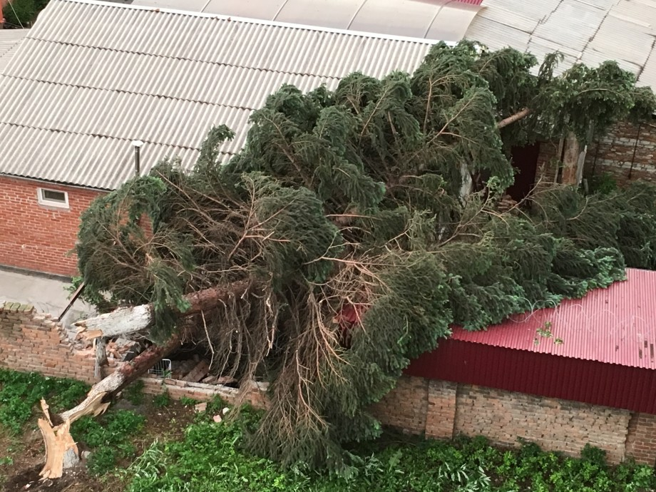 Шквалистый ветер повалил десятки деревьев во Владикавказе
