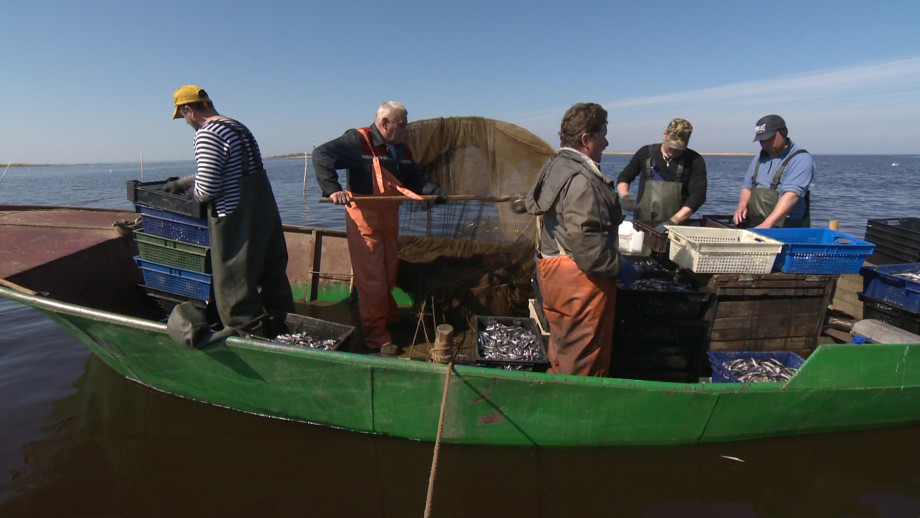 Рыбка-кормилица: на Новой Ладоге выловили сотни тонн корюшки