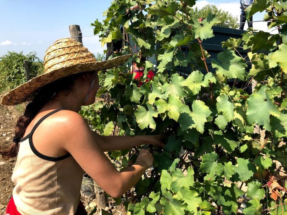 Виноградный дресс-код: что нужно знать, отправляясь осенью в Кахетию