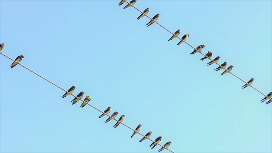 Коргалжынский заповедник: колония розовых фламинго в Центральном Казахстане