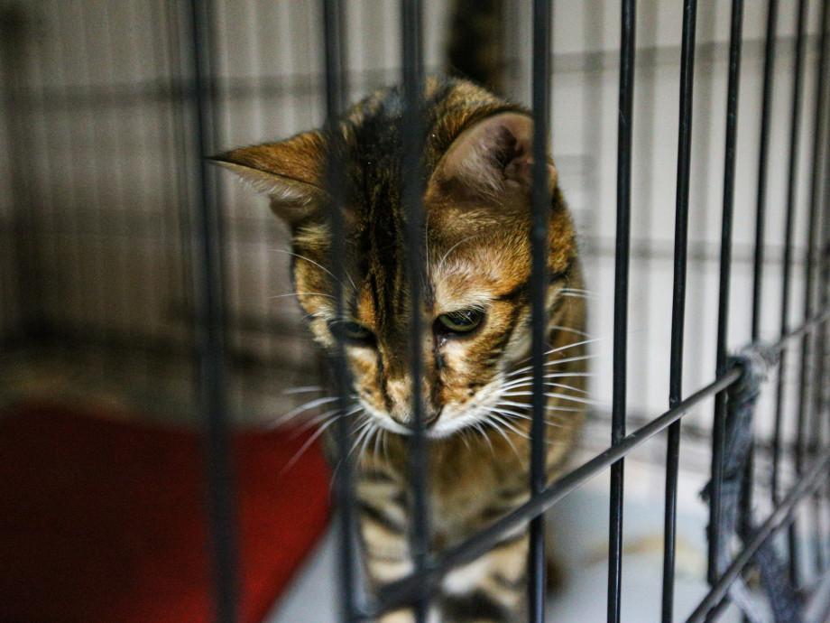 Нет права даже на жизнь: как бездомные животные пережили пандемию и что их ждет теперь?