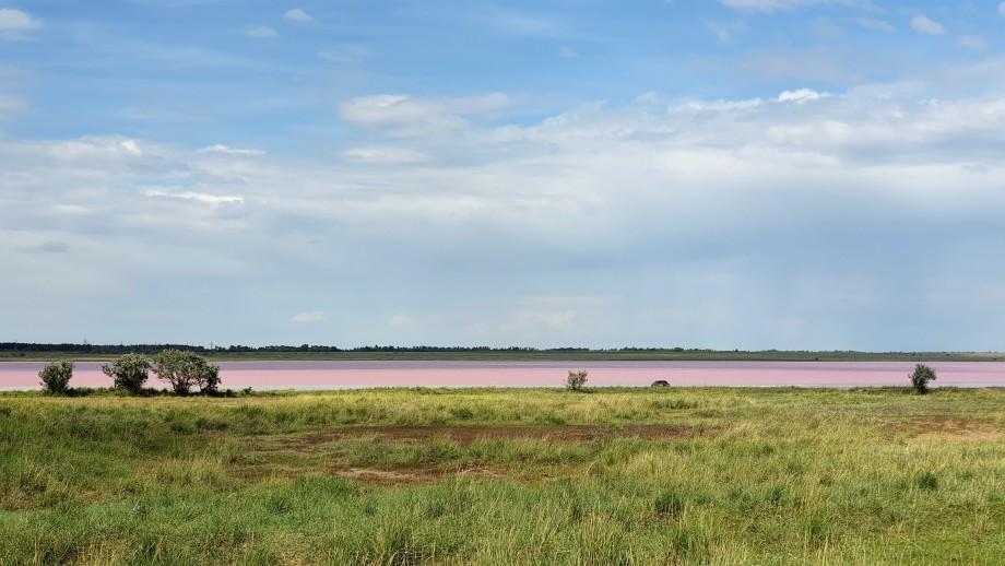 Розовые озера Казахстана Кобейтуз и Коряковка оказались под угрозой из-за большого наплыва туристов