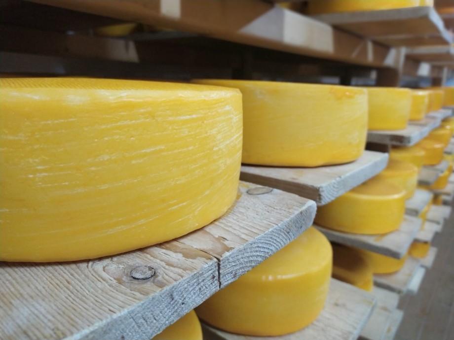 В Кыргызстане делают сыр по швейцарской технологии (ФОТО)
