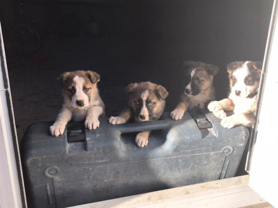 «МИР» привез подарки в приют для бездомных собак в Нальчике