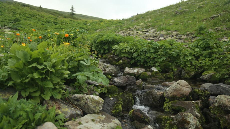 Магия «золотого» Алтая: что вы не знали о Западно-Алтайском заповеднике?