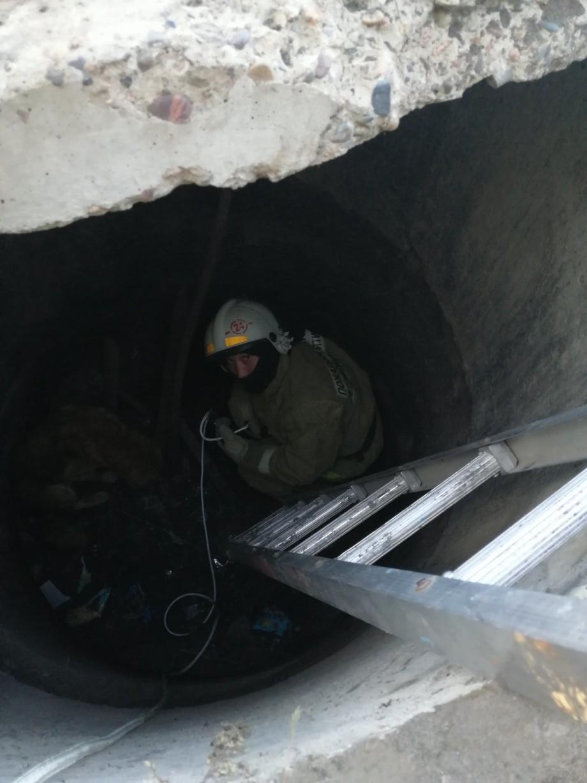 В Бурятии пожарные спасли упавшую в заброшенный колодец собаку (ФОТО)