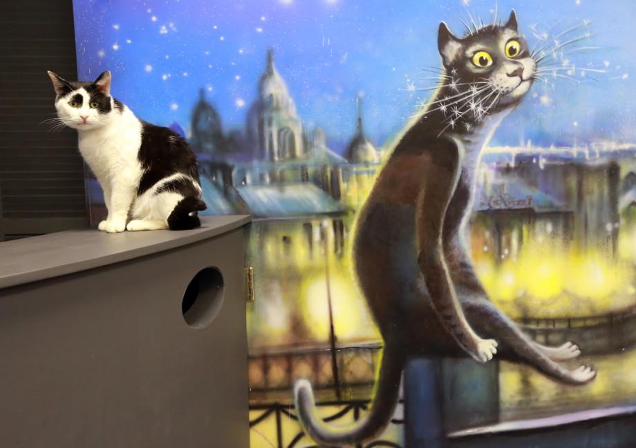 Лакомства, игрушки и когтеточки: что дарят петербургским котам в их профессиональный праздник?