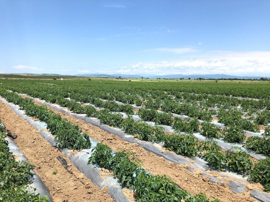 Пандемия в пользу: грузинские фермеры заговорили о необходимости импортозамещения