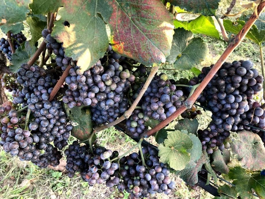 «Вино» или «винный напиток»: как закон «О виноградарстве и виноделии» повлияет на цену и качество вин