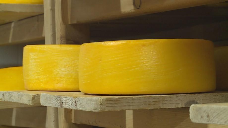 Как делают швейцарский сыр в Кыргызстане?