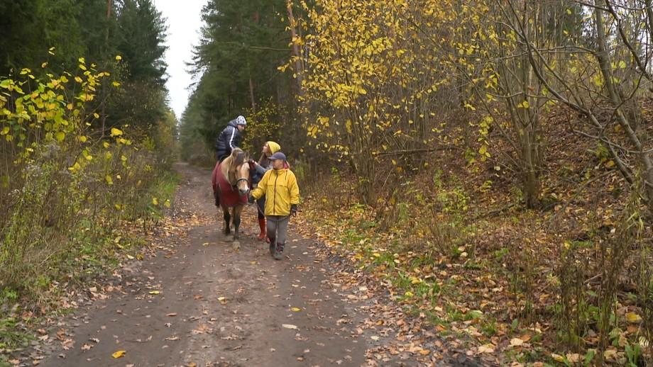 Белорусская упряжная: как в стране пытаются сохранить единственную местную породу лошадей
