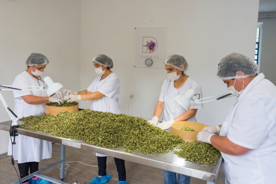 Не просто напиток, а целая традиция: как производят чай в Армении?