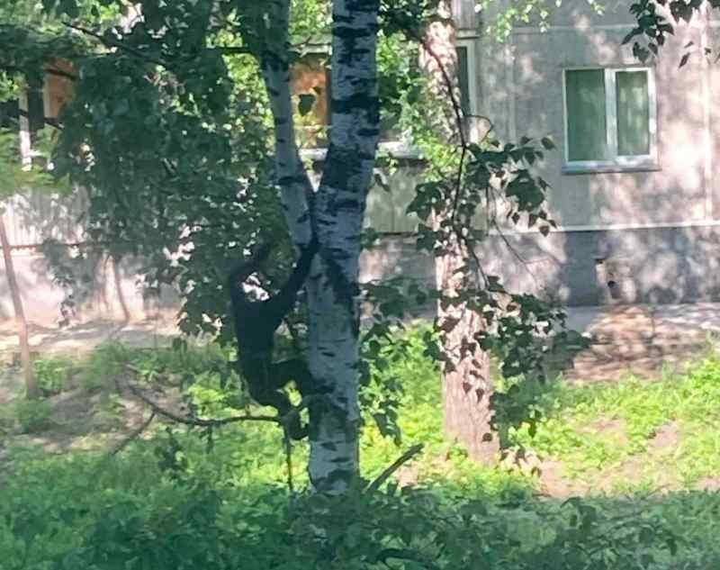 Обезьяна разогнала белок в новосибирском Академгородке (ФОТО)