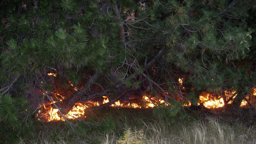 Вблизи Боржоми горят леса