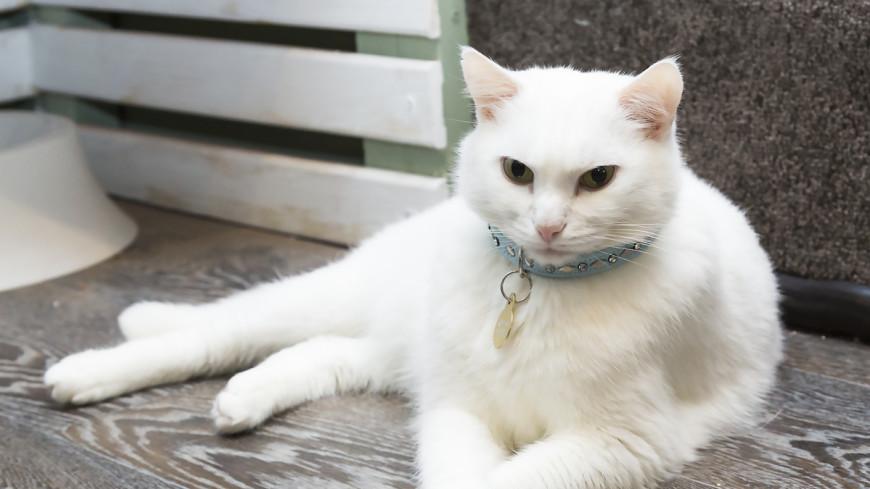 Без кота и жизнь не та: как усато-полосатые покорили людей