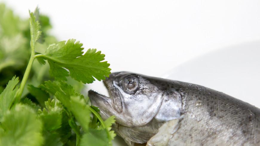 Рыбный обед для маленьких приверед