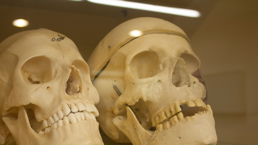 Палеонтологи: древние хищники охотились на предков человека