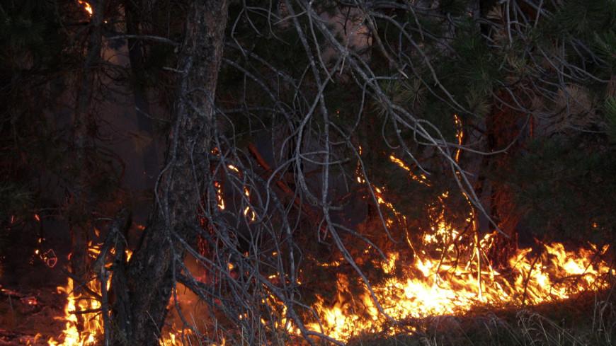 Лесные пожары охватили Иркутскую область