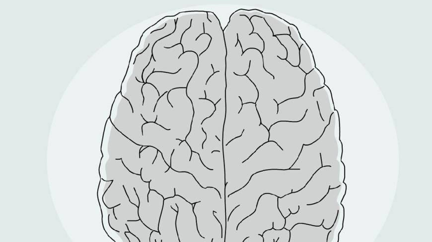Размер имеет значение: у злых людей мозг меньше
