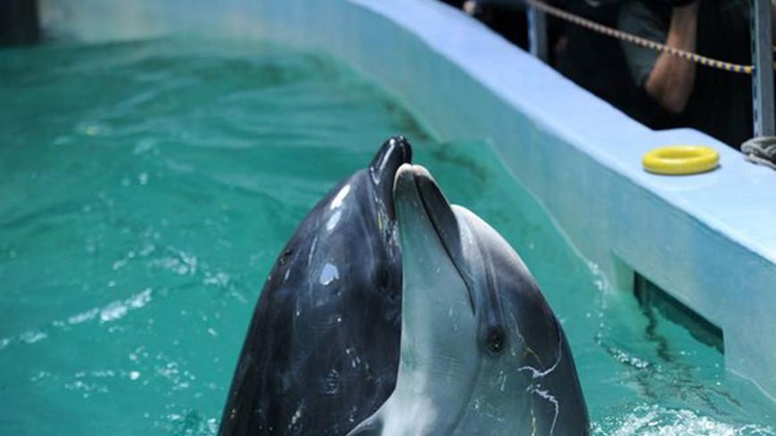 Дельфинарий в Минске подготовил шоу ко Дню святого Валентина