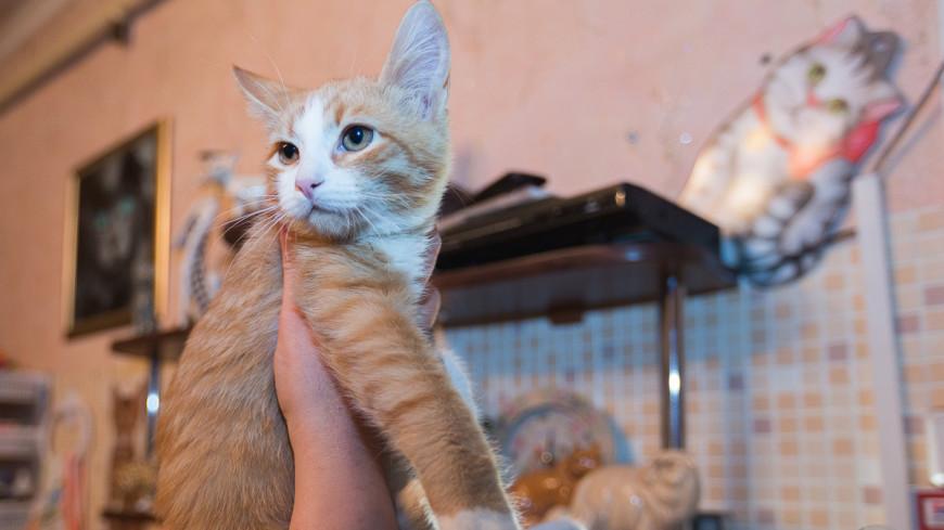 Братья по крови: как кошки спасают своих сородичей