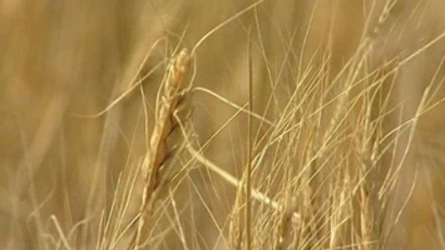 Россия ввела пошлину на экспорт зерна