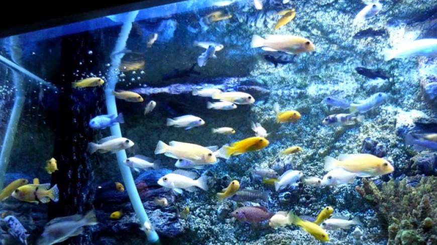 На ВДНХ появится океанариум площадью 4 гектара с косатками