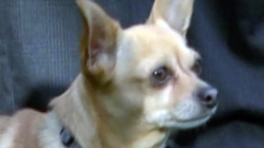 Собачье 3D-счастье двуногого Турбо Ру