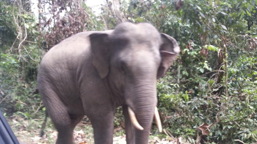 Ради бивней зимбабвийских слонов травят цианидом