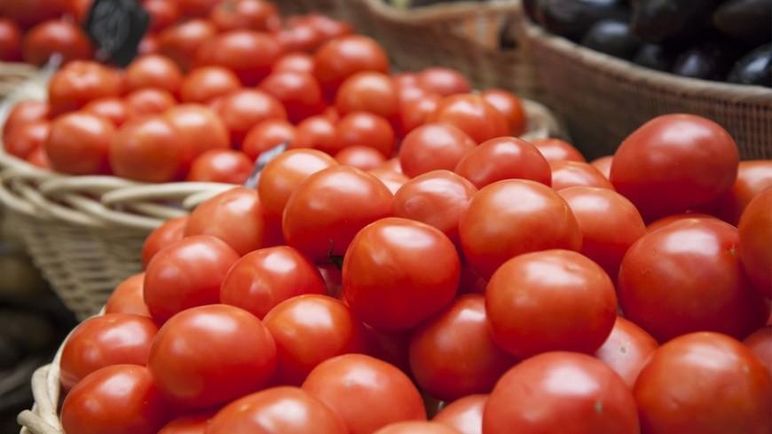 Нидерландские фермеры массово уничтожают тонны продукции из-за эмбарго России