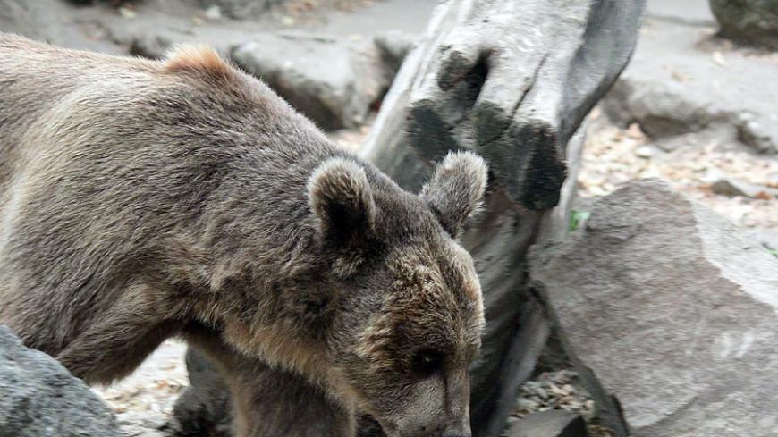 Горожан на Камчатке предупредили о возможной встрече с медведем