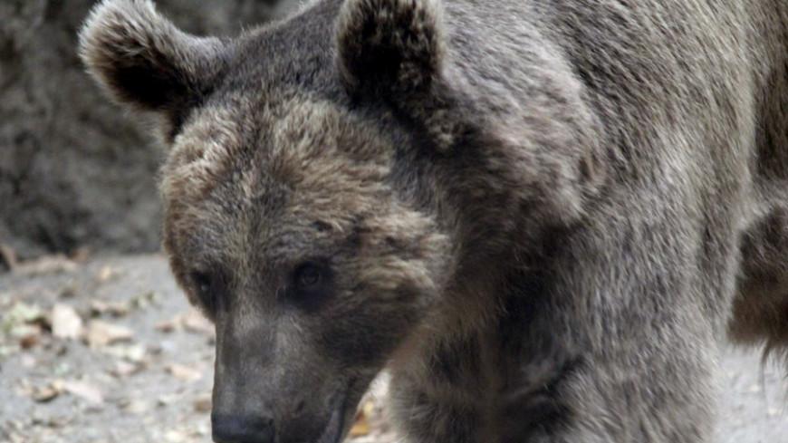 Россиян защитят от медведей спреи
