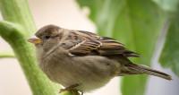 Москва без птиц: почему красивые газоны угрожают жизни пернатых