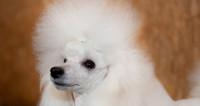 Четвероногие миллионеры: рейтинг самых богатых собак