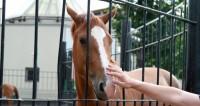 На фестивале «Спасская башня» проходит День лошади